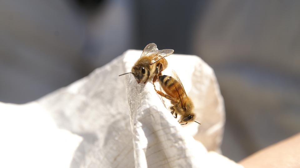 特定非営利活動法人銀座ミツバチプロジェクト