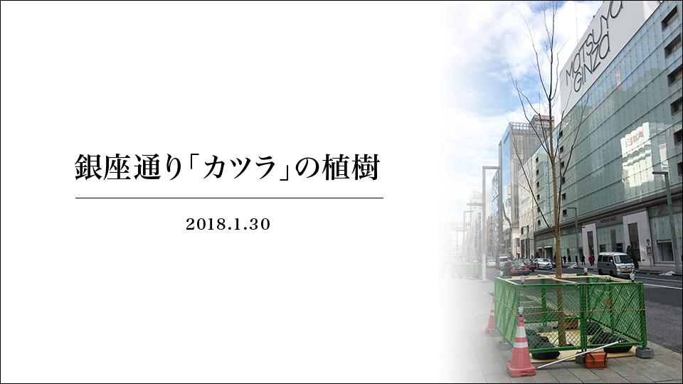 (jp) 銀座通り「カツラ」の植樹