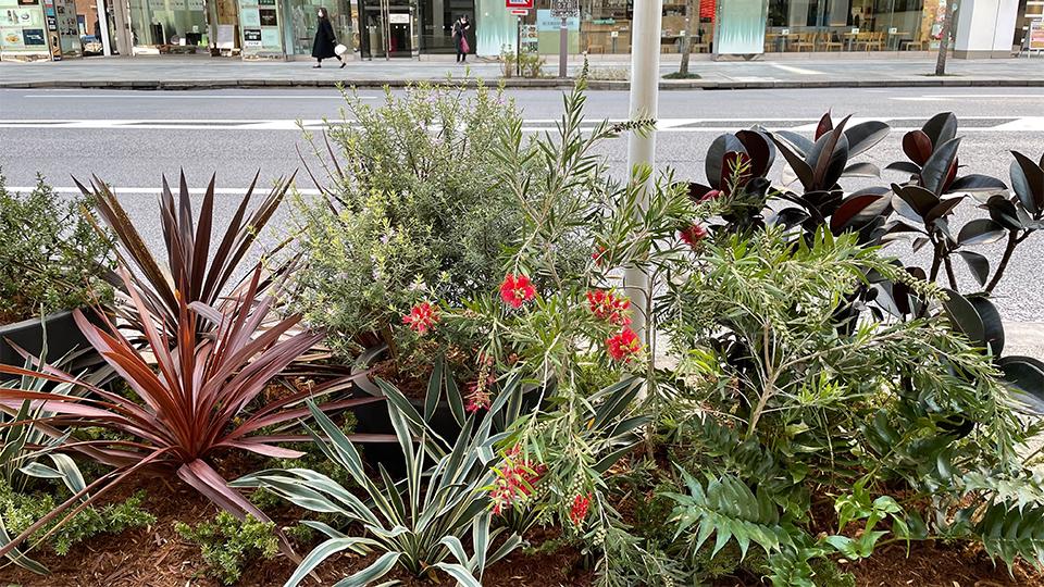 銀座通りに新花壇誕生